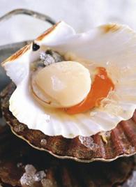 En janvier cuisinez la coquille saint jacques le blog - Comment cuisiner des coquilles st jacques ...